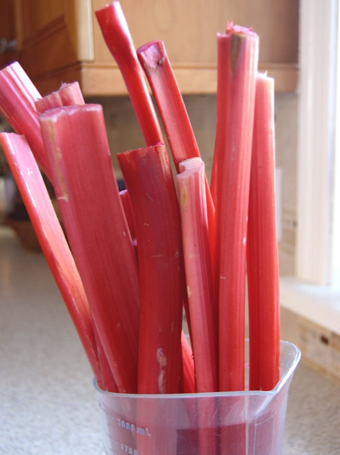 a vase holding stalks of red rhubarb