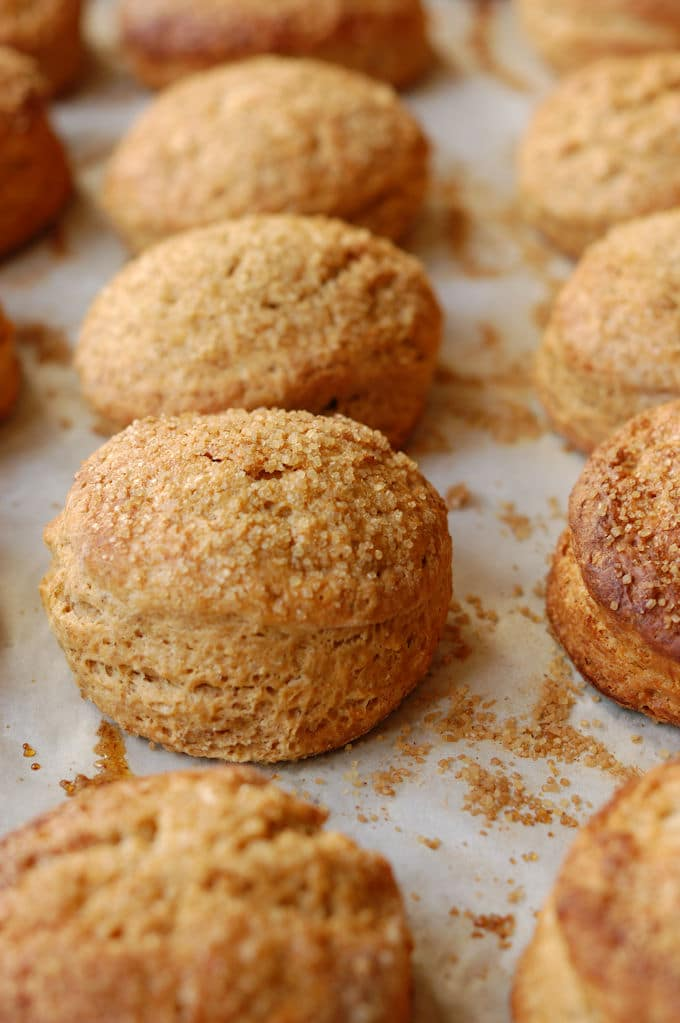 warm gingerbread scones