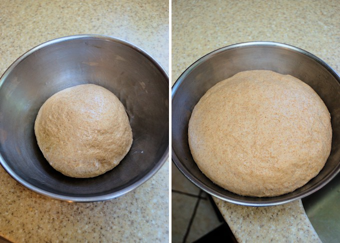 two side by side photos showing whole wheat bread dough before and after rising