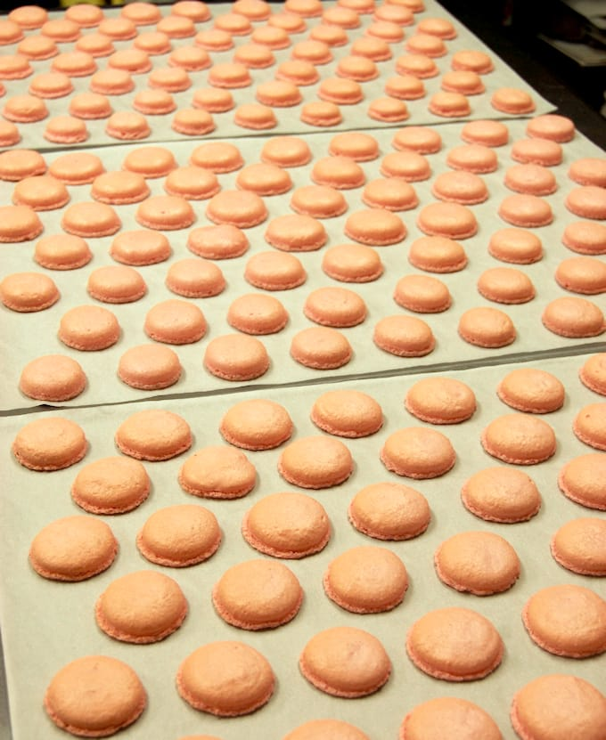 hundreds of macaron shells cooling on a table