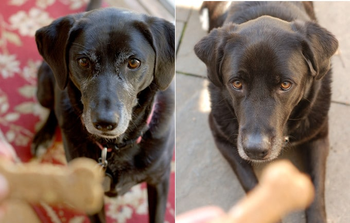 healthy dog biscuits