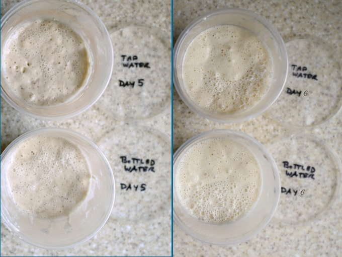 side by side photos showing day 5 and 6 of making a sourdough starter