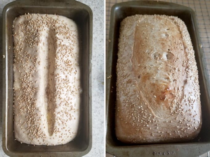 two photos showing a loaf of sourdough wheat bread before and after baking.